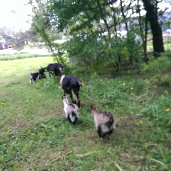 Ariadne and Aprillis running aftr mom